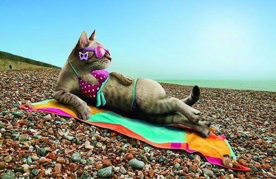 Айшвария, долгожданный отпуск картинки смешные фото